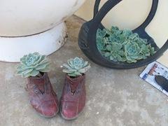shoe-plants